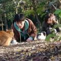 『私は猫ストーカー』(鈴木卓爾)