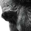 『リンカーン』(スティーヴン・スピルバーグ)